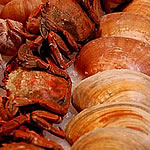 Marisco, crustáceos e bivalves