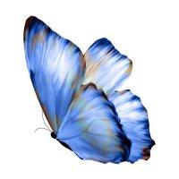Retrato de BlueButterfly