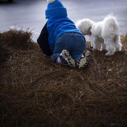 Criança a gatinhar ao lado de um cachorro