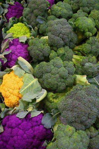 Legumes na gravidez